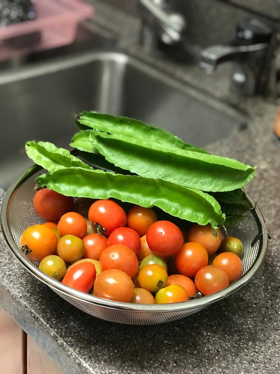 Gardening in Hilo