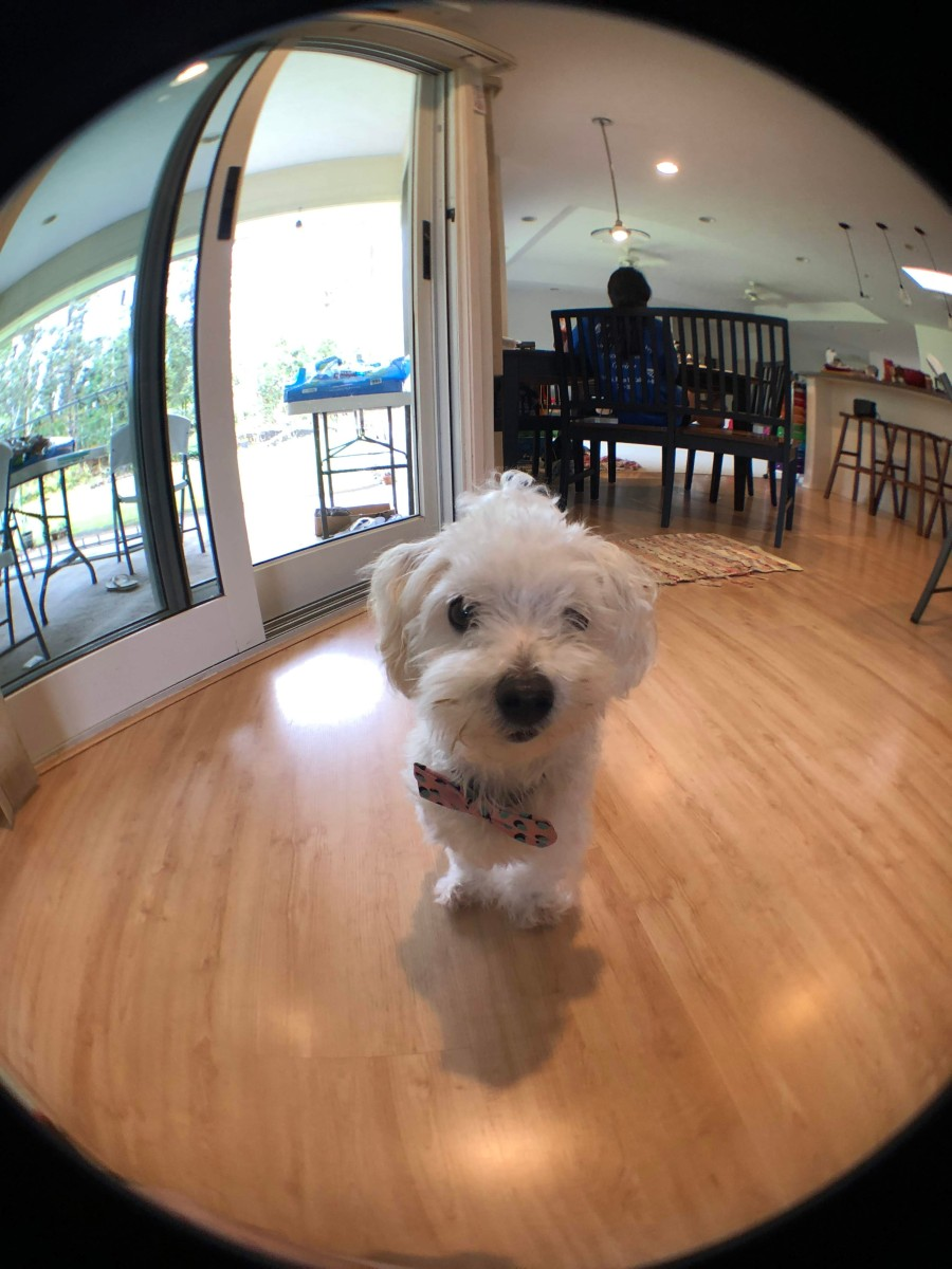 What's Your Go-To Camera? Why I got an Olloclip